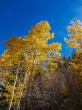 Blue Skies, Yellow Aspens. Taken near Phantom Canyon, in Southwest Colorado in the fall. The yellow and blue, contrast nicely. It`s hard to decide what is most stock photo