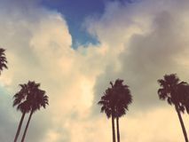 Row of Palm Trees. Taken before a rain storm of a row of palm trees Royalty Free Stock Image