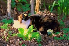 Taki słodki wiosny princess zdjęcie stock
