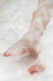 Taking bubble bath Royalty Free Stock Photo