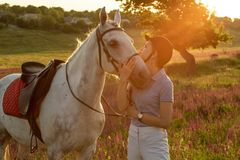 Jockey young girl petting and hugging white horse in evening sunset. Sun flare. Taking care of animals, love and friendship concept. Jockey young girl petting royalty free stock photos