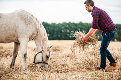 Taking care of his favorite horse. stock photography