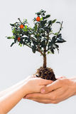 Taking care of new tree or the environment Royalty Free Stock Photo