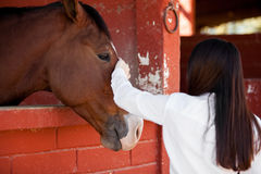 Taking Care Of My Horse Stock Photo