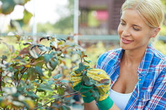 Taking care of plants Royalty Free Stock Image