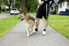 Taking the dog for a walk Royalty Free Stock Photos
