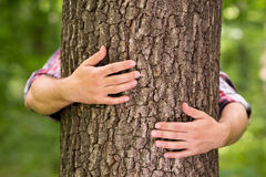 Taking energy from tree. Stock Images