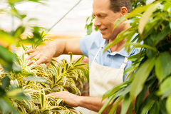 Taking good care of plants. royalty free stock image