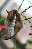 Taking life in upside down. Beautiful butterfly resting on a branch at a local butterfly pavilion Stock Photo