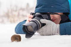 Taking a macro photo of a mouse in habitat Royalty Free Stock Photo