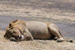 Taking a nap Stock Photo