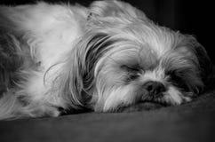Taking a Nap Stock Photos