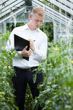 Taking notes in a greenhouse Stock Photography