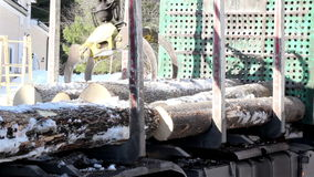 Taking out logs at the back of the truck stock video