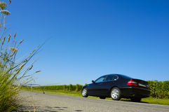 Taking over. Plants spreading out over a road as a car passes. Motion blur on the car Stock Photo