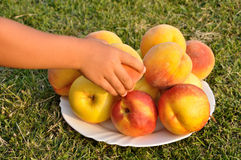 Taking a peach Stock Image