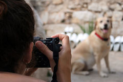Taking photo. Of dog Stock Photo