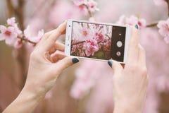 Taking photo of blossom tree. Stock Photo