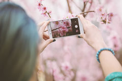 Taking photo of blossom tree. Royalty Free Stock Images