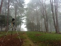 Taking photo. Camera setting on tripod in foggy Stock Photo