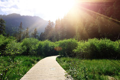 Wooden hiking trail  in froest Royalty Free Stock Photos