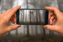 Taking photo of fog in the haunted forest with mobile phone. Woman hands with mobile cell phone to take a photo of fog in the haunted forest stock photo
