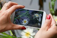 Taking photo on a mobile phone Royalty Free Stock Photo