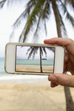 Taking photograph of palm tree with mobile cell phone Stock Image
