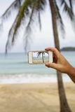 Taking photograph of palm tree with mobile cell phone Stock Photos