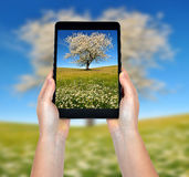 Taking photos  with a tablet Royalty Free Stock Photo