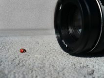 Taking a picture of a ladybug Royalty Free Stock Images