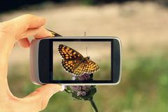 Taking picture with mobile phone. Hand with mobile phone taking picture of butterfly on flower Royalty Free Stock Photography