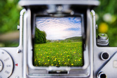 Taking a picture through the old camera on meadow with yellow dandelion flowers Royalty Free Stock Photography