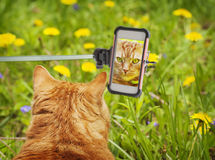 Taking a picture of red cat. Stock Photos