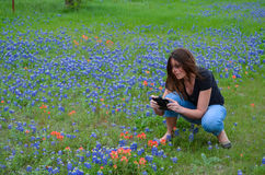 Taking Pictures of Bluebonnets. Taking pictures of a field of bluebonnets with her cell phone Royalty Free Stock Images