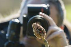Taking pictures of Magnolia grandiflora seeds Stock Photo