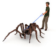 Taking A Spider For A Walk. A satirical illustration depicting a man walking a giant wolf spider in that same matter as people walk their dogs Royalty Free Stock Photo
