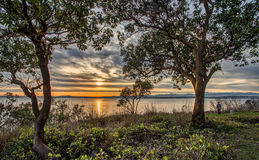 Man with Two Dogs Watches Sunset over Puget Sound Royalty Free Stock Image