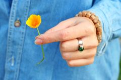 Takinng een oranje bloem Stock Foto