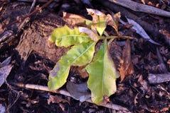 Takje met heldere - groen - gele bladeren en zachte onscherpe grond royalty-vrije stock afbeelding