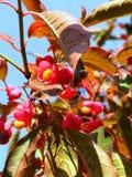 Takje met rode bloemen royalty-vrije stock foto