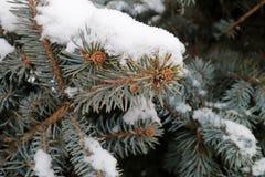 Takjebomen in de sneeuw in het park Royalty-vrije Stock Afbeelding