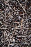 Takjes en puin op grond stock foto