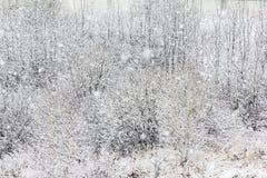 Takjes en takken met sneeuw worden behandeld die Stock Afbeeldingen