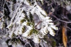 Takjes met ijs en sneeuw worden behandeld die Royalty-vrije Stock Foto