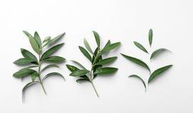 Takjes met verse groene olijfbladeren op witte achtergrond royalty-vrije stock afbeelding