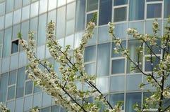 Takjes van een boom met witte bloesems in een stad royalty-vrije stock foto's