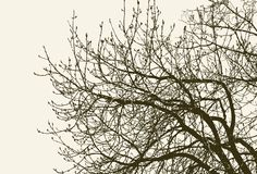 Takjes van een de lenteboom stock illustratie