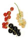 Takjes van rode, witte en geïsoleerded zwarte bes Royalty-vrije Stock Foto's