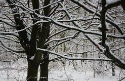 Takken in de sneeuw Royalty-vrije Stock Foto's